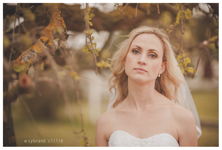 Saxenburg Winery wedding